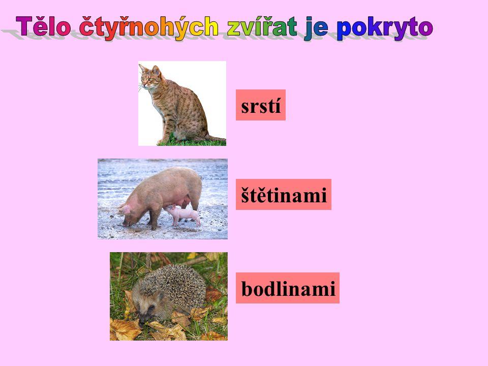Tělo čtyřnohých zvířat je pokryto