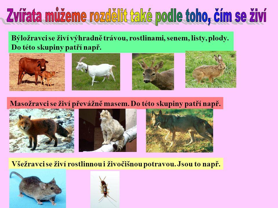 Zvířata můžeme rozdělit také podle toho, čím se živí