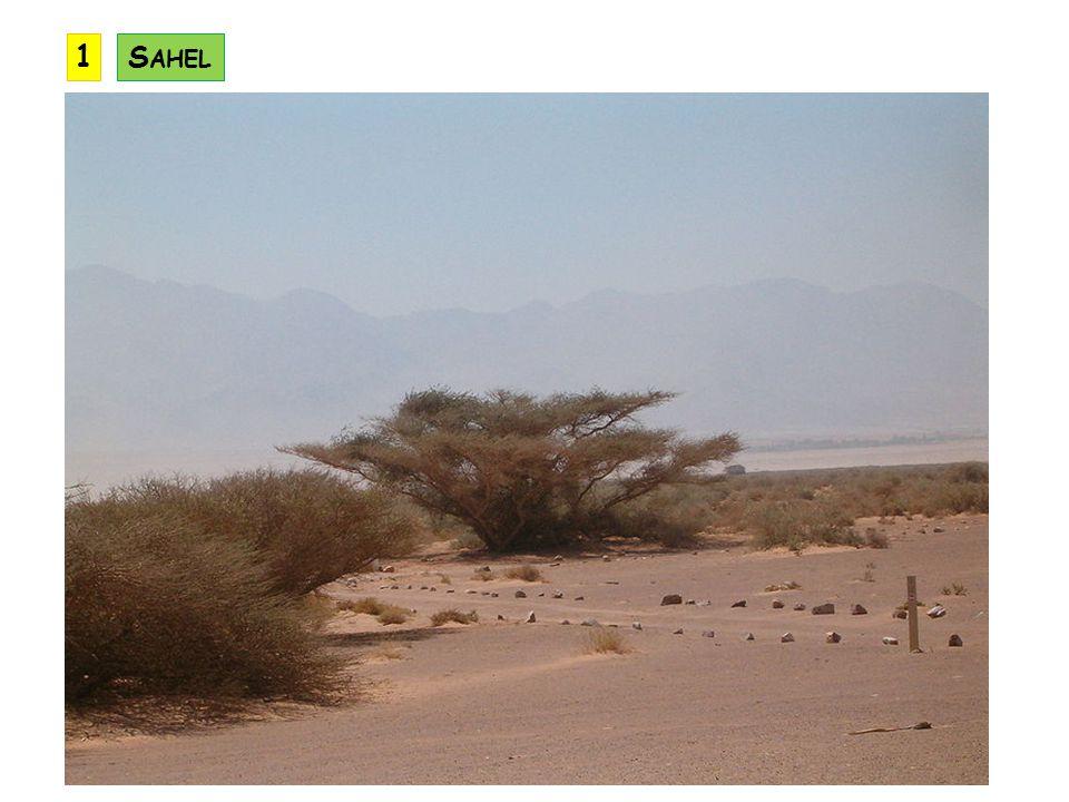 1 Sahel