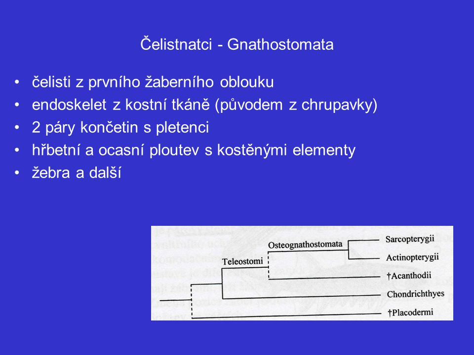Čelistnatci - Gnathostomata