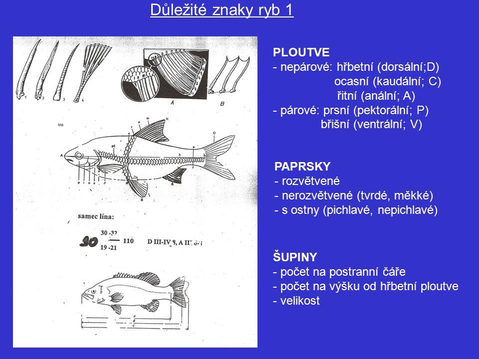 Důležité znaky ryb 1 PLOUTVE - nepárové: hřbetní (dorsální;D)