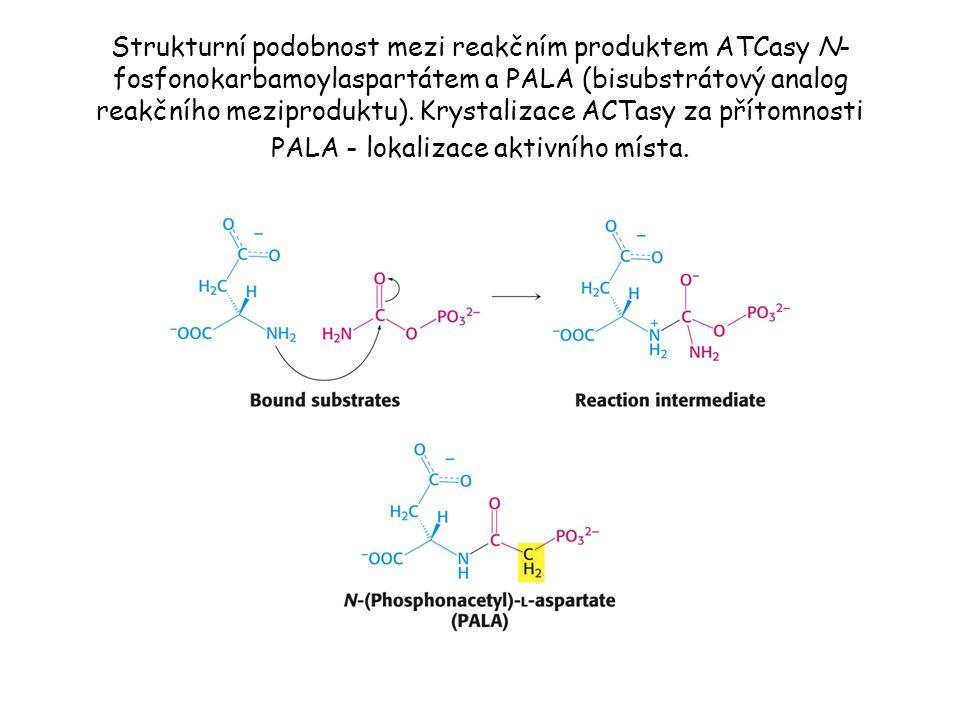 Strukturní podobnost mezi reakčním produktem ATCasy N-fosfonokarbamoylaspartátem a PALA (bisubstrátový analog reakčního meziproduktu).