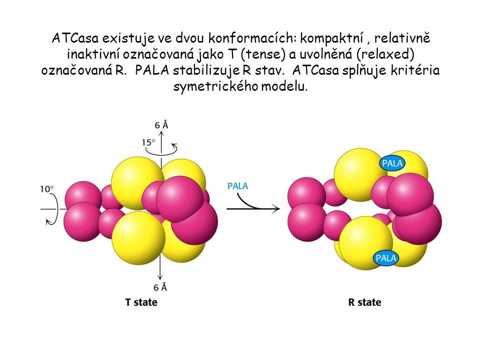 ATCasa existuje ve dvou konformacích: kompaktní , relativně inaktivní označovaná jako T (tense) a uvolněná (relaxed) označovaná R.