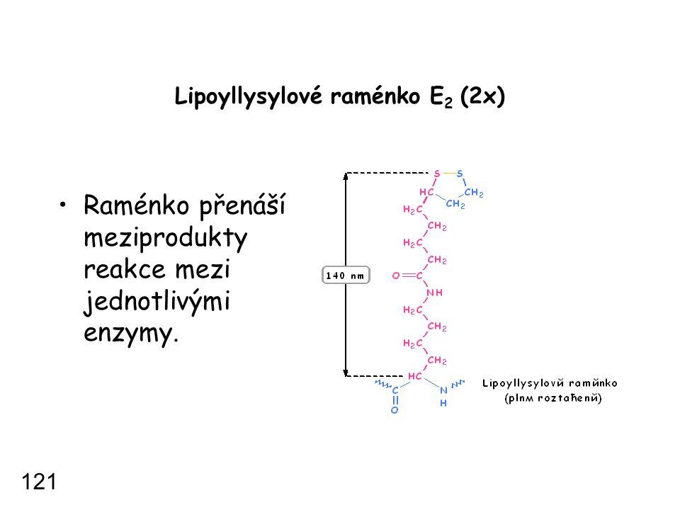 Lipoyllysylové raménko E2 (2x)