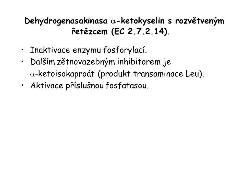 Dehydrogenasakinasa a-ketokyselin s rozvětveným řetězcem (EC 2. 7. 2