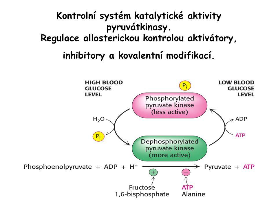 Kontrolní systém katalytické aktivity pyruvátkinasy