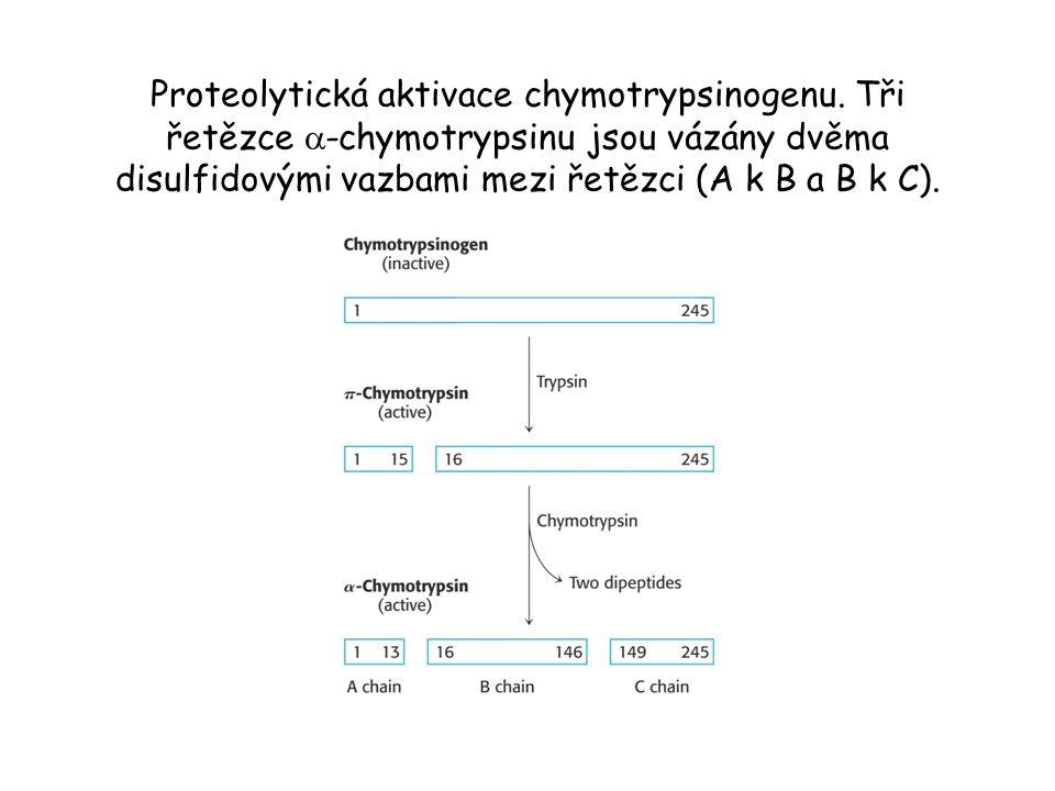 Proteolytická aktivace chymotrypsinogenu