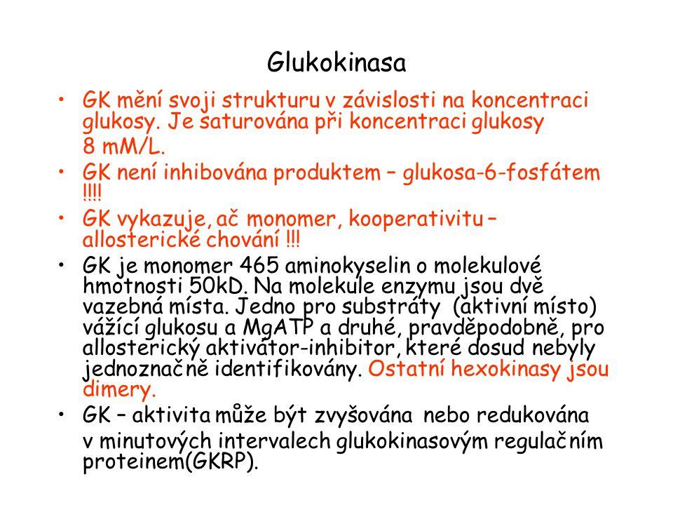 Glukokinasa GK mění svoji strukturu v závislosti na koncentraci glukosy. Je saturována při koncentraci glukosy.
