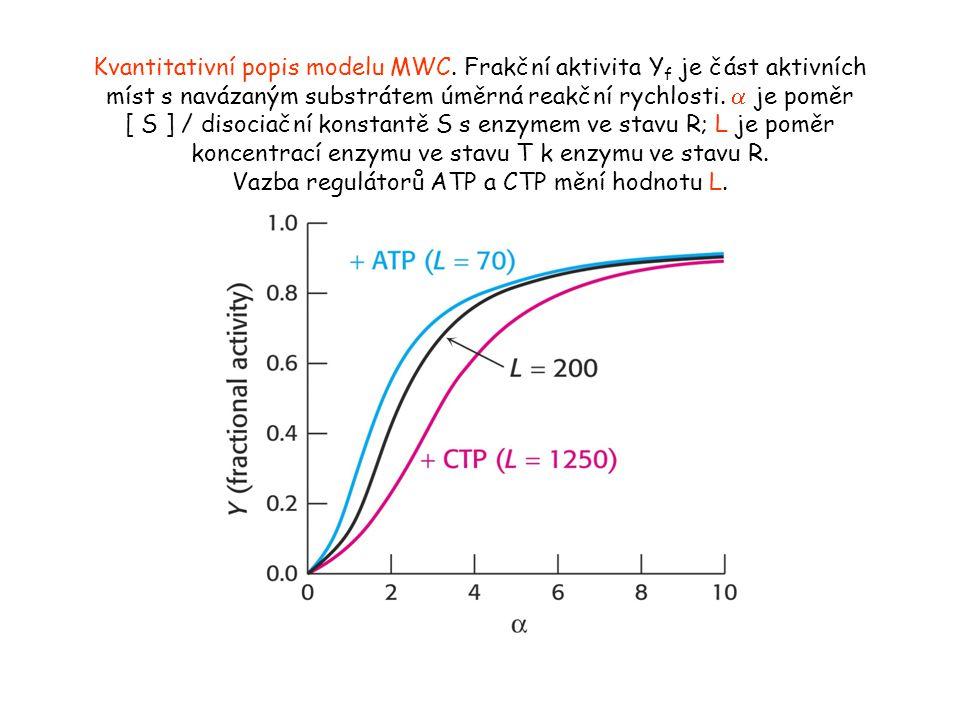 Kvantitativní popis modelu MWC