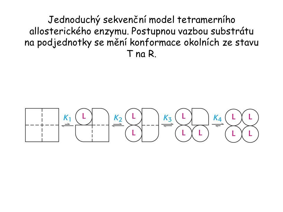 Jednoduchý sekvenční model tetramerního allosterického enzymu