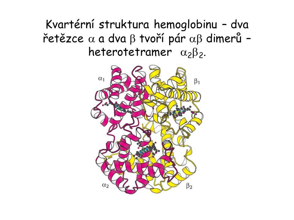 Kvartérní struktura hemoglobinu – dva řetězce a a dva b tvoří pár ab dimerů – heterotetramer a2b2.