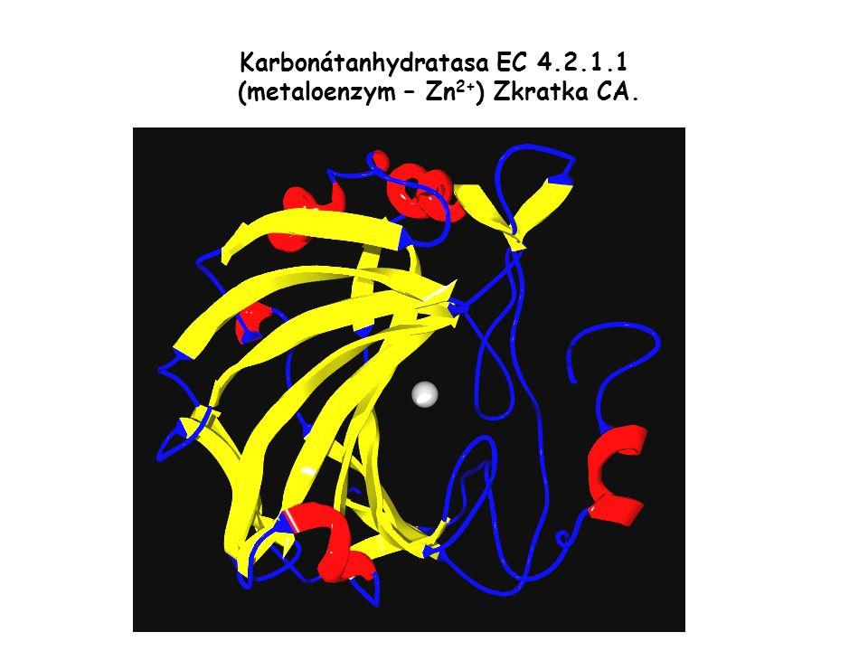 Karbonátanhydratasa EC 4.2.1.1 (metaloenzym – Zn2+) Zkratka CA.