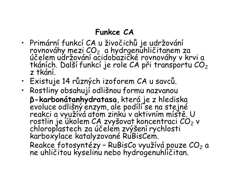 Funkce CA