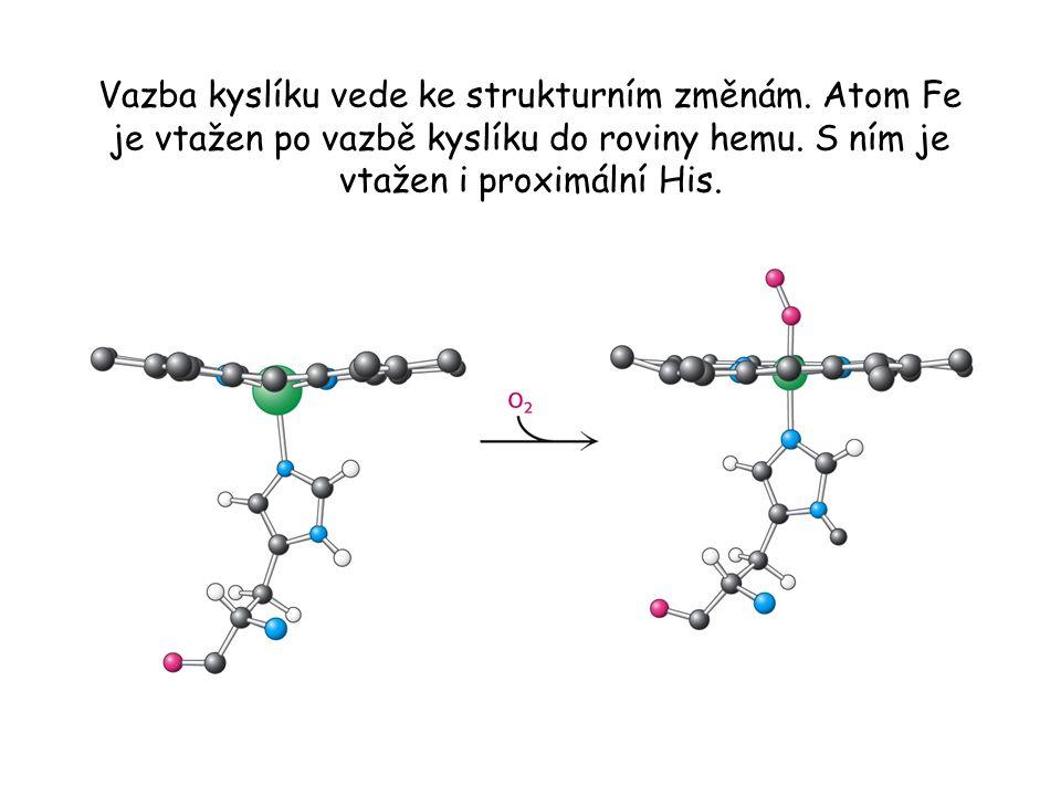 Vazba kyslíku vede ke strukturním změnám