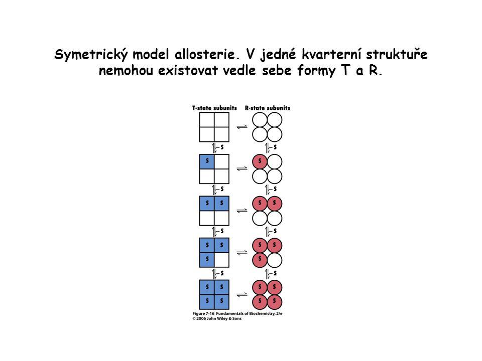 Symetrický model allosterie