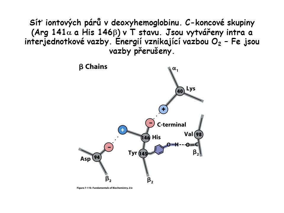 Síť iontových párů v deoxyhemoglobinu