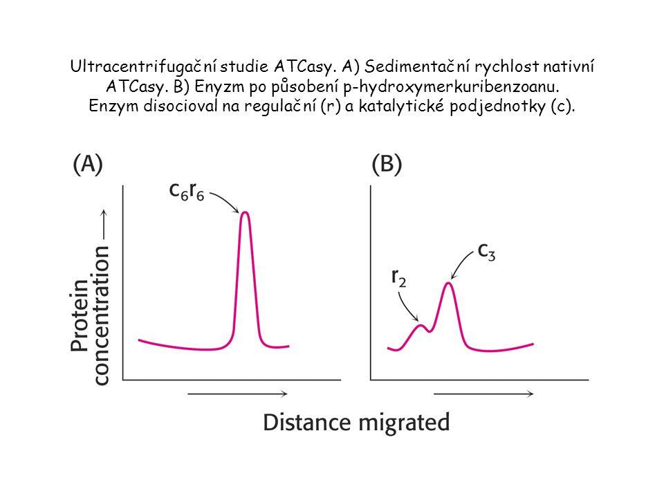 Ultracentrifugační studie ATCasy