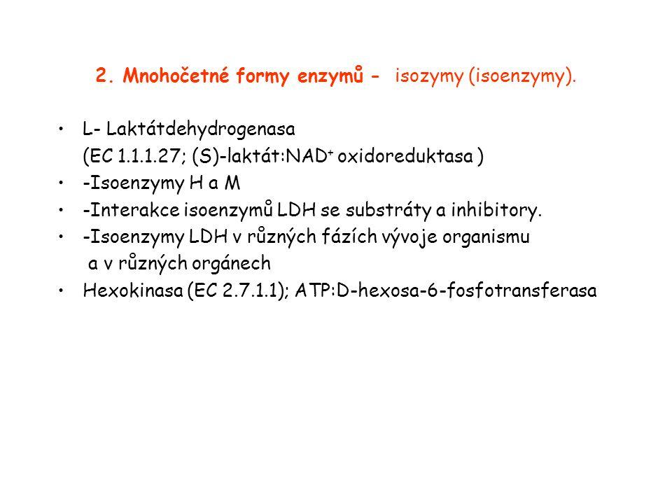 2. Mnohočetné formy enzymů - isozymy (isoenzymy).