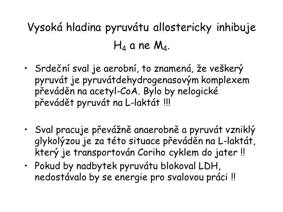 Vysoká hladina pyruvátu allostericky inhibuje H4 a ne M4.