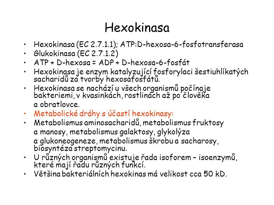 Hexokinasa Hexokinasa (EC 2.7.1.1); ATP:D-hexosa-6-fosfotransferasa