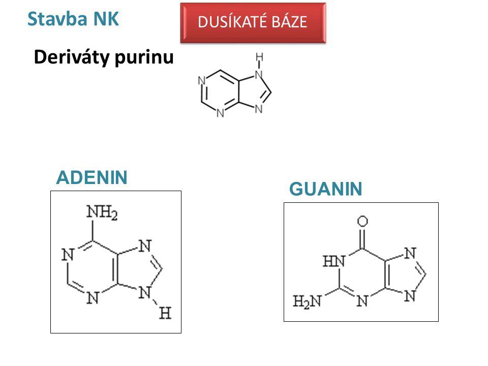 Stavba NK Deriváty purinu
