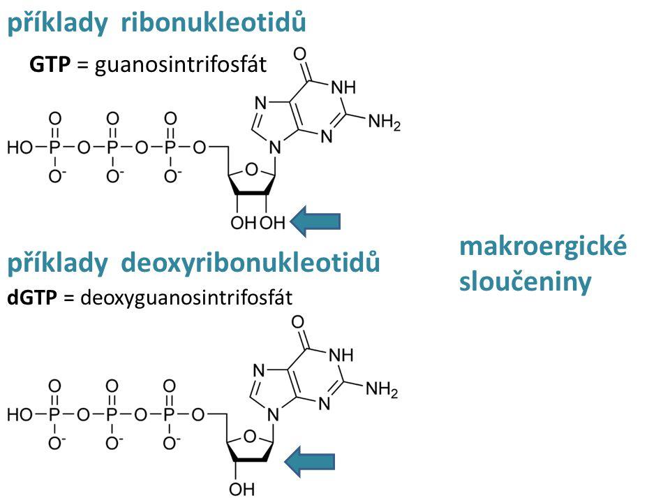 příklady ribonukleotidů