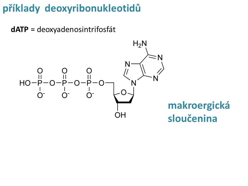 příklady deoxyribonukleotidů