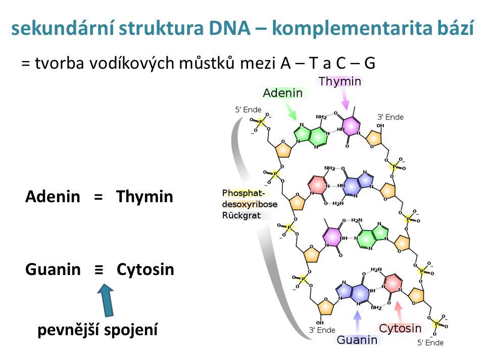 sekundární struktura DNA – komplementarita bází