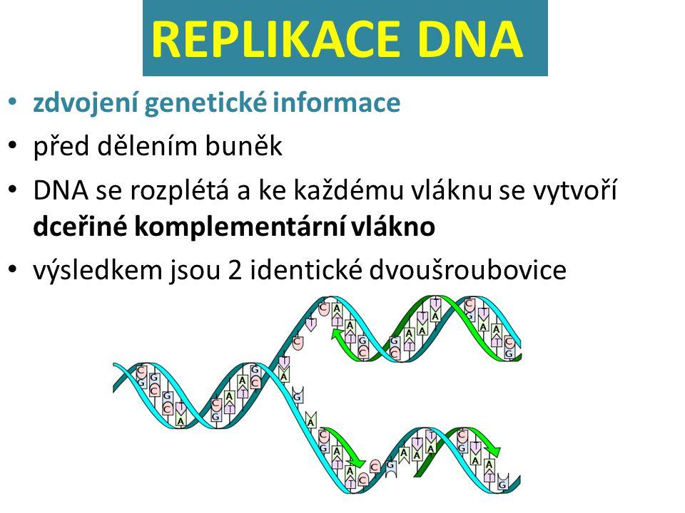 REPLIKACE DNA zdvojení genetické informace před dělením buněk