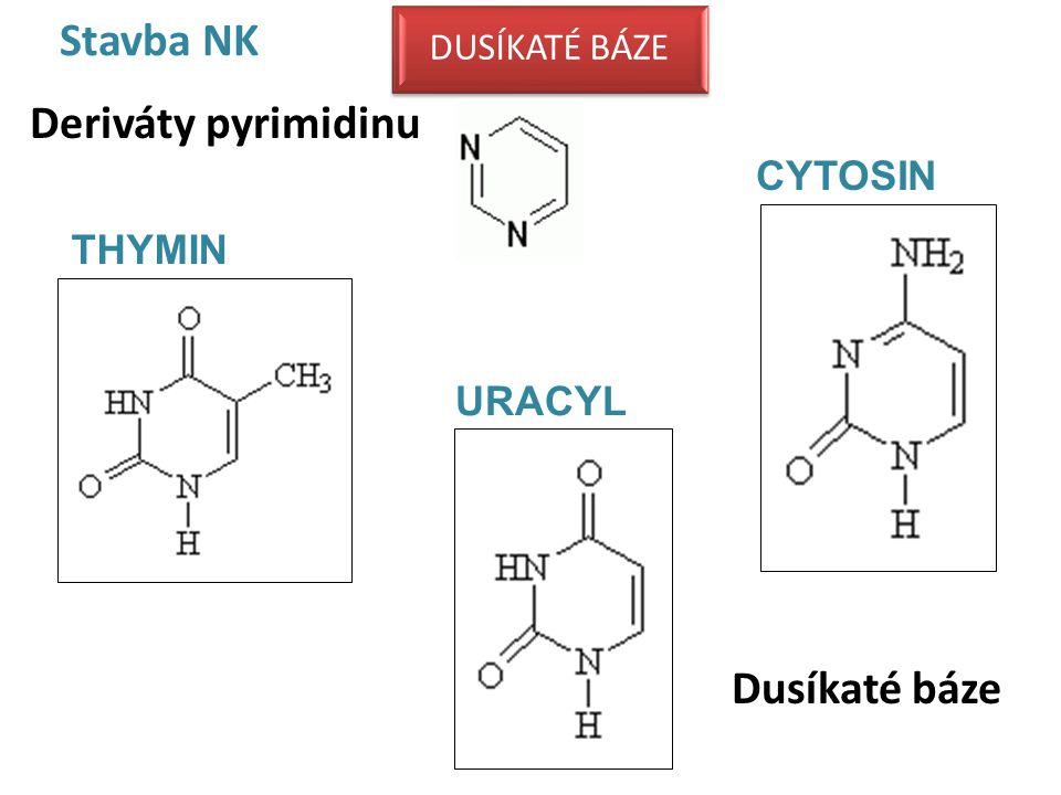 Stavba NK Deriváty pyrimidinu Dusíkaté báze