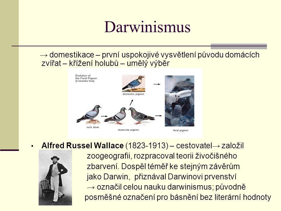 Darwinismus → domestikace – první uspokojivé vysvětlení původu domácích zvířat – křížení holubů – umělý výběr.