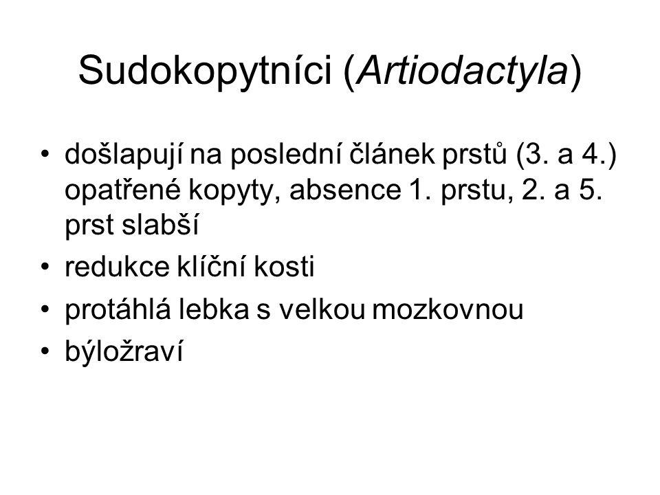 Sudokopytníci (Artiodactyla)