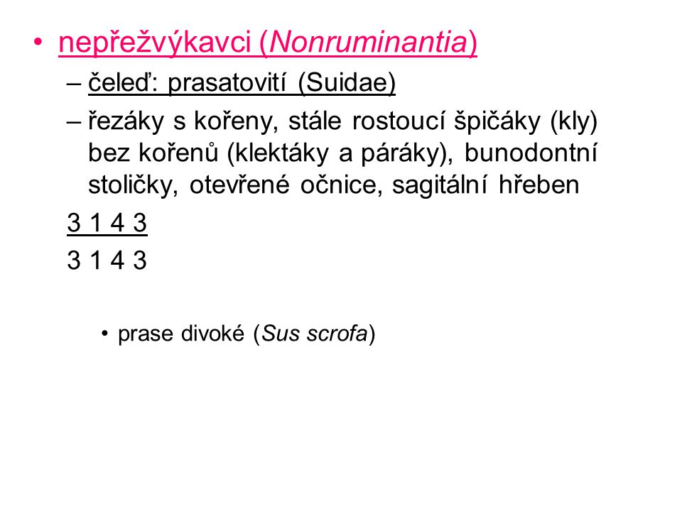 nepřežvýkavci (Nonruminantia)