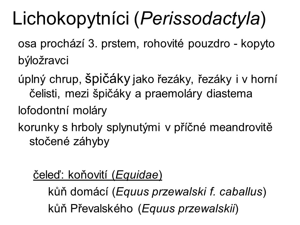 Lichokopytníci (Perissodactyla)