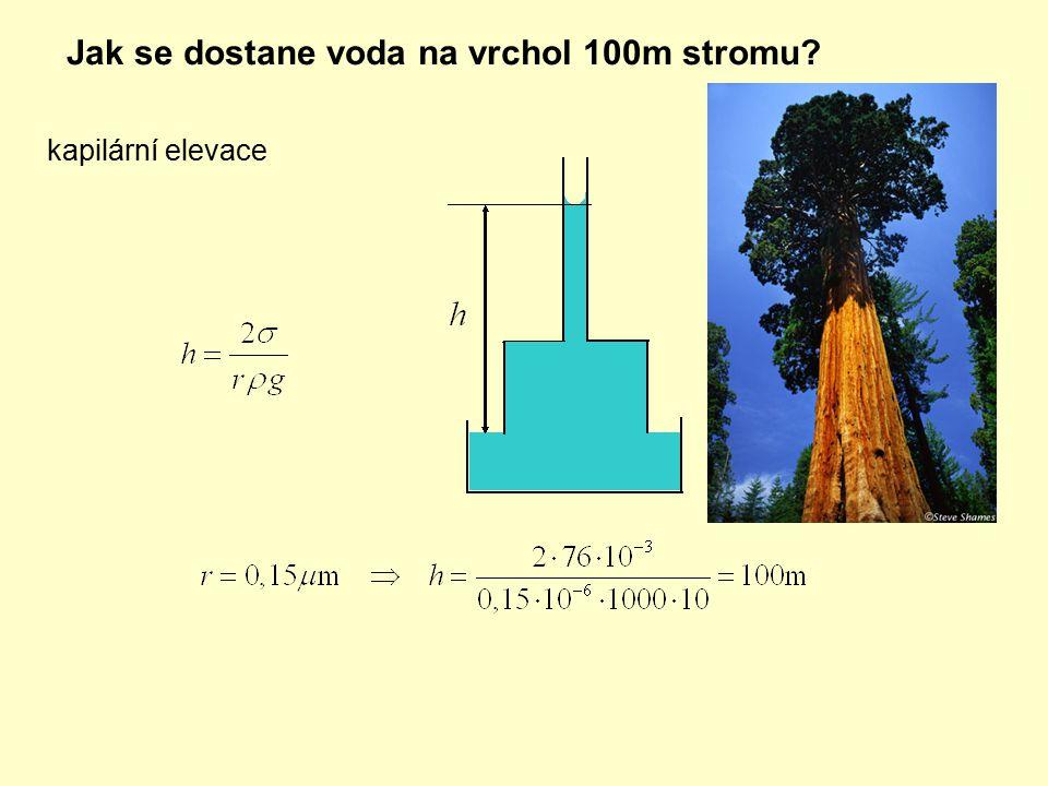 Jak se dostane voda na vrchol 100m stromu