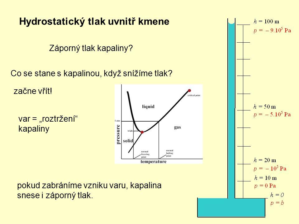 Hydrostatický tlak uvnitř kmene