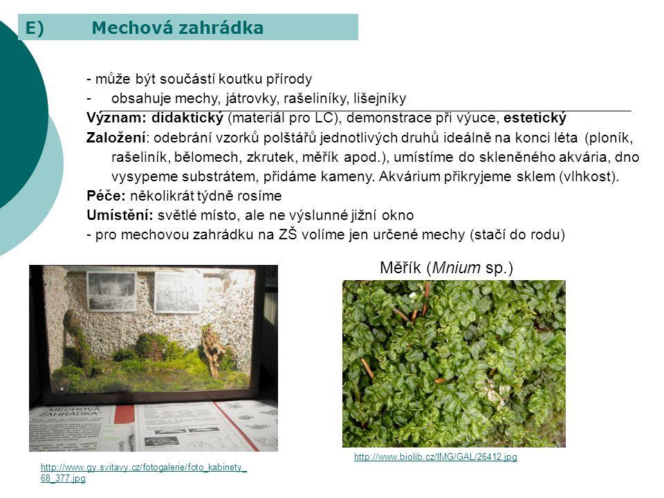 E) Mechová zahrádka Měřík (Mnium sp.)