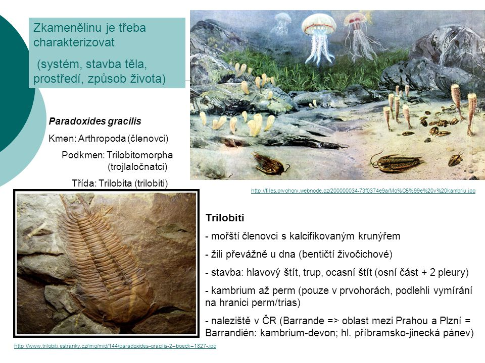 Zkamenělinu je třeba charakterizovat