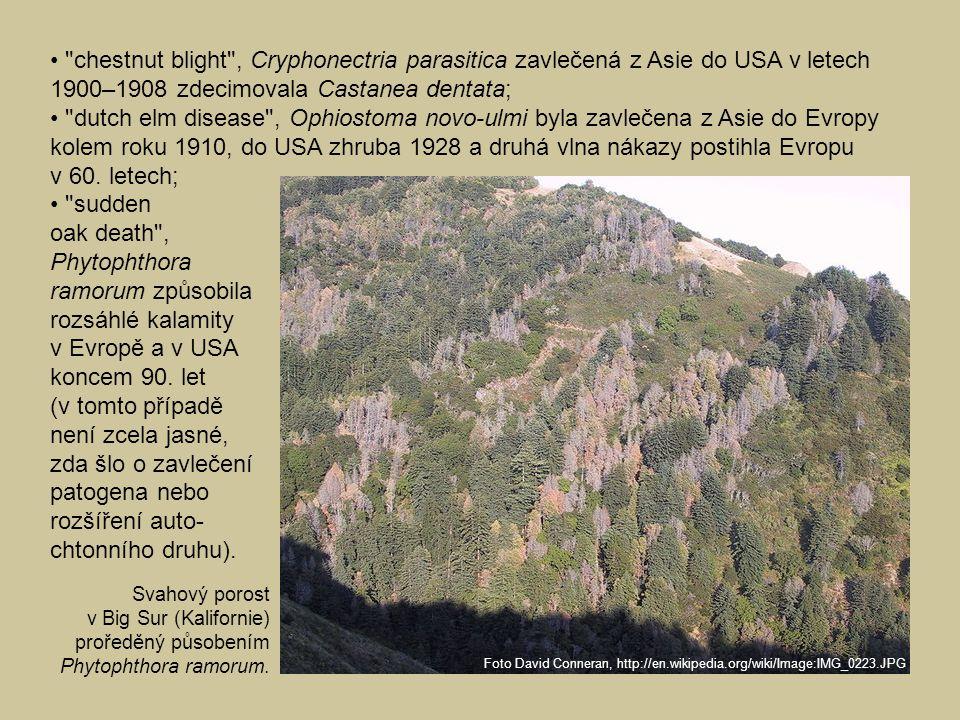 • chestnut blight , Cryphonectria parasitica zavlečená z Asie do USA v letech 1900–1908 zdecimovala Castanea dentata; • dutch elm disease , Ophiostoma novo-ulmi byla zavlečena z Asie do Evropy kolem roku 1910, do USA zhruba 1928 a druhá vlna nákazy postihla Evropu v 60. letech;