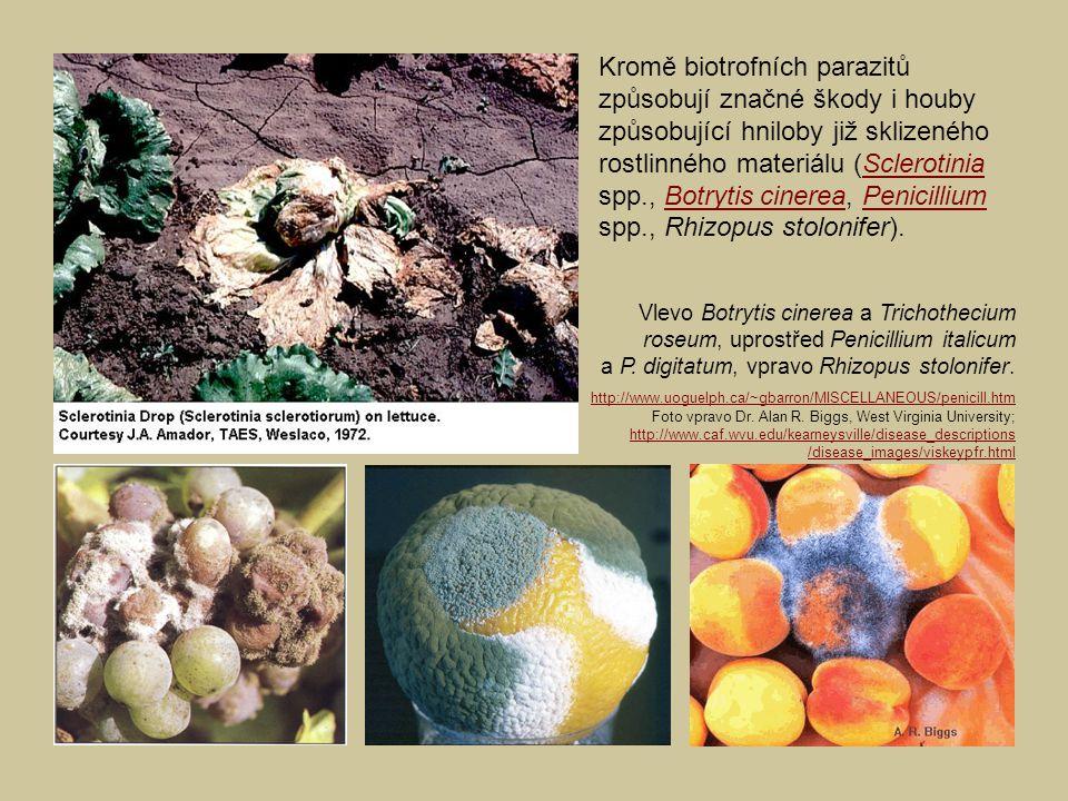 Kromě biotrofních parazitů způsobují značné škody i houby způsobující hniloby již sklizeného rostlinného materiálu (Sclerotinia spp., Botrytis cinerea, Penicillium spp., Rhizopus stolonifer).