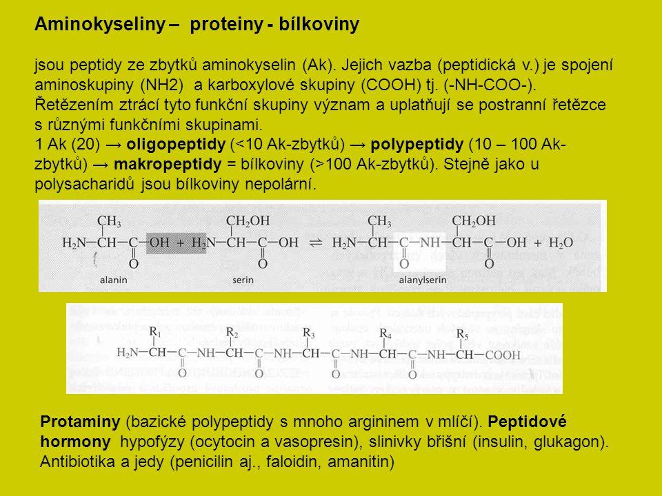 Aminokyseliny – proteiny - bílkoviny