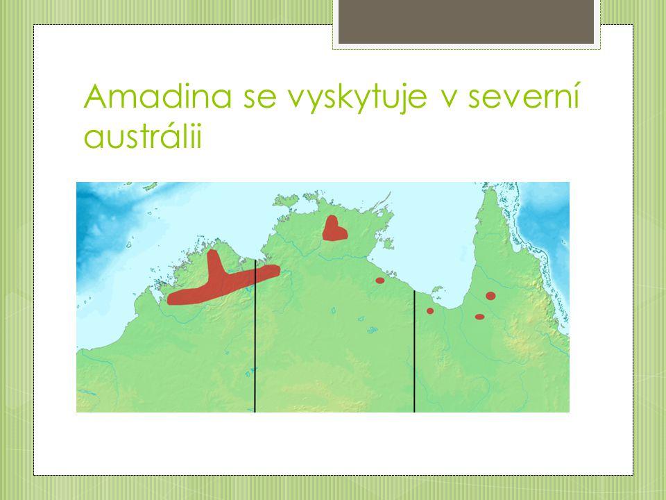 Amadina se vyskytuje v severní austrálii