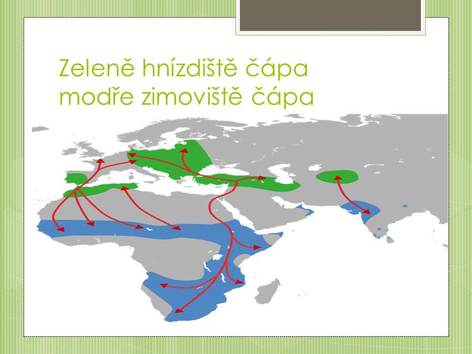 Zeleně hnízdiště čápa modře zimoviště čápa
