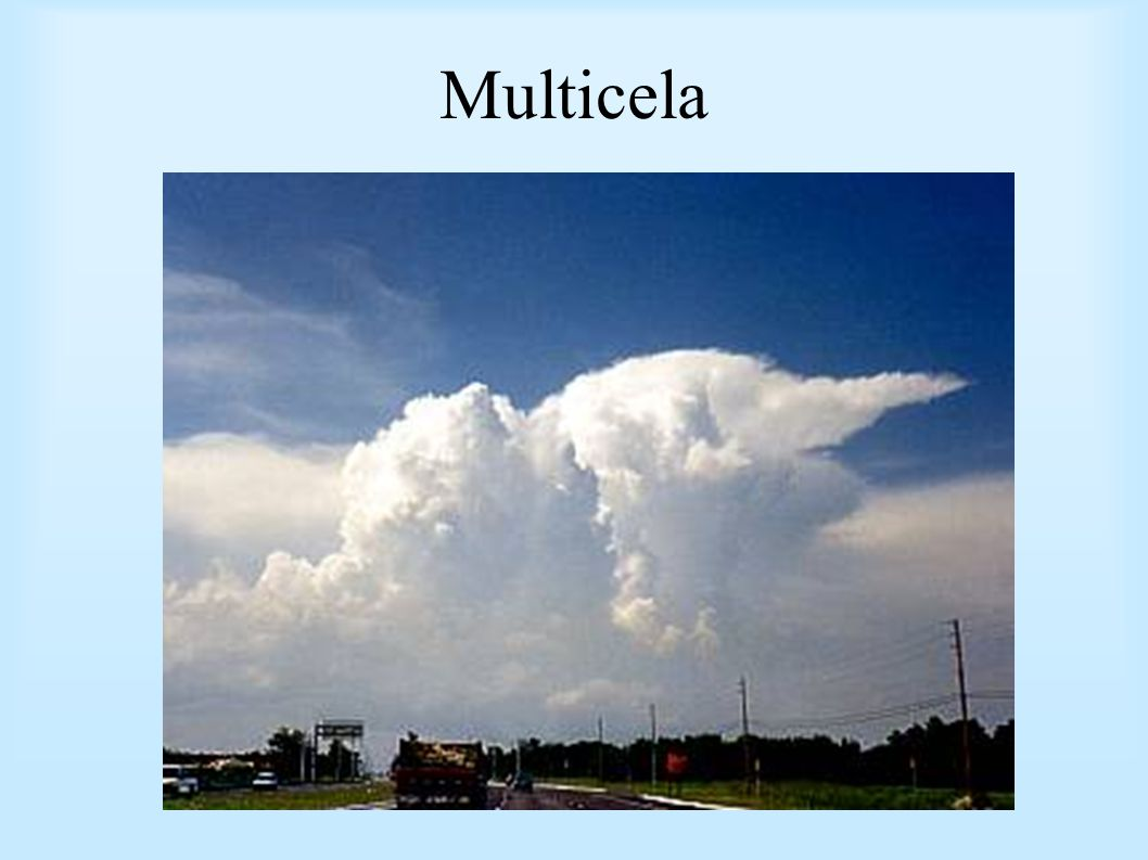 Multicela
