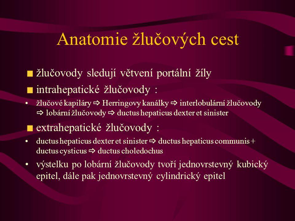 Anatomie žlučových cest