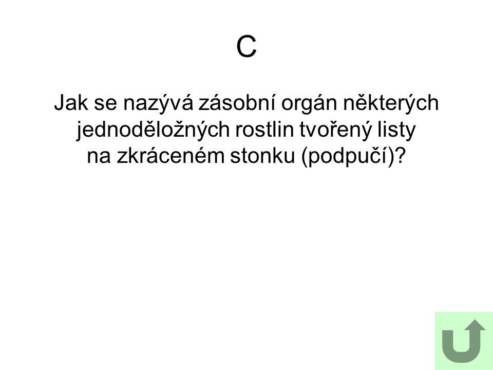 C Jak se nazývá zásobní orgán některých jednoděložných rostlin tvořený listy na zkráceném stonku (podpučí)