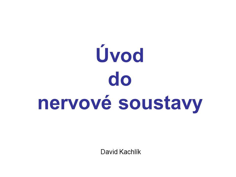 Úvod do nervové soustavy