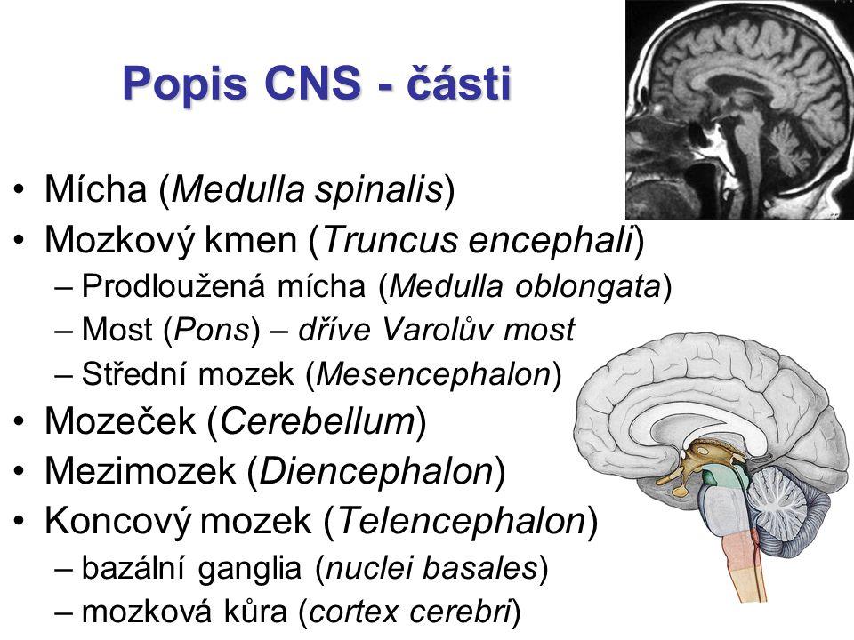 Popis CNS - části Mícha (Medulla spinalis)