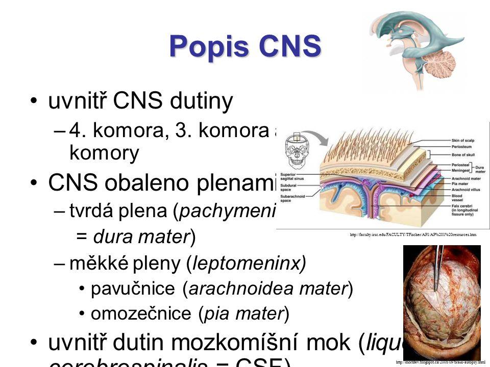 Popis CNS uvnitř CNS dutiny CNS obaleno plenami: