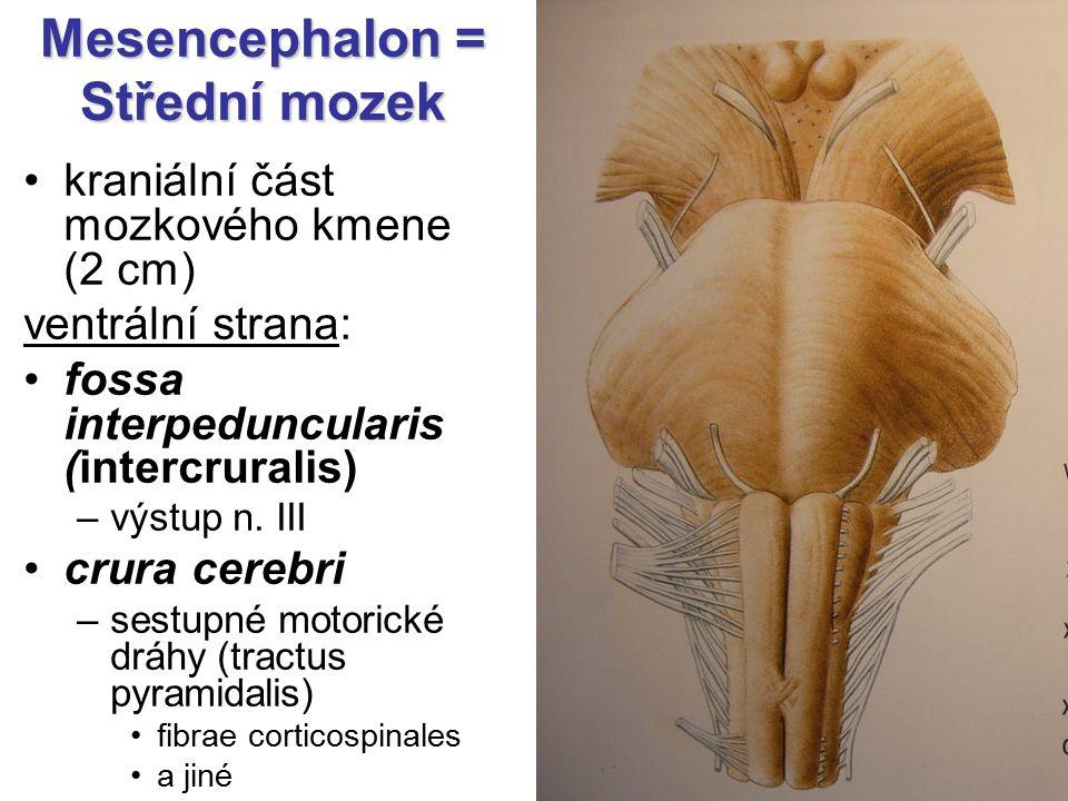 Mesencephalon = Střední mozek